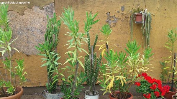 le%E1nderek+%E9s+kaktuszok