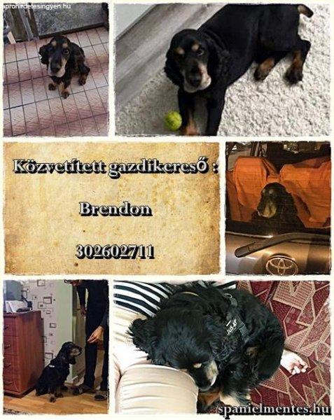 Brendon+gazdit+keres