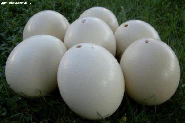 Strucc tojás