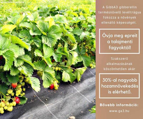 F%F6ldieper+%28szam%F3ca%29+termeszt%F5k+figyelm%E9be%21