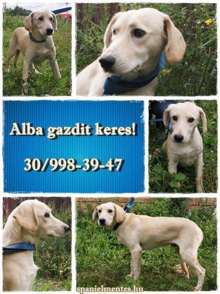 Alba+gazdit+keres