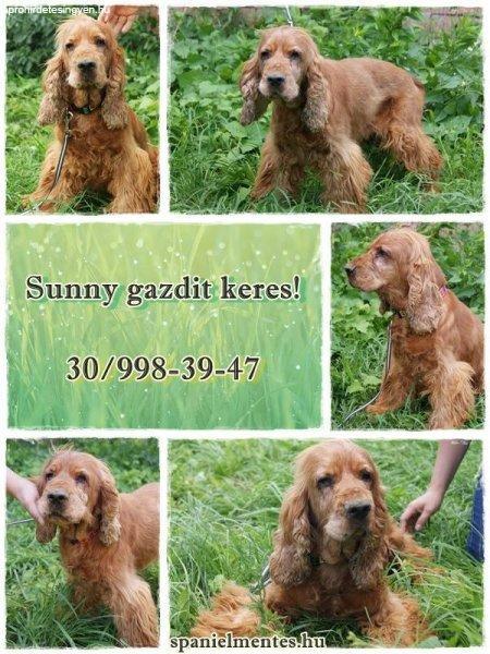 Sunny+gazdit+keres