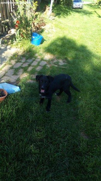Fekete+kutya+feh%E9r+mell%E9nnyel+aj%E1nd%E9kba