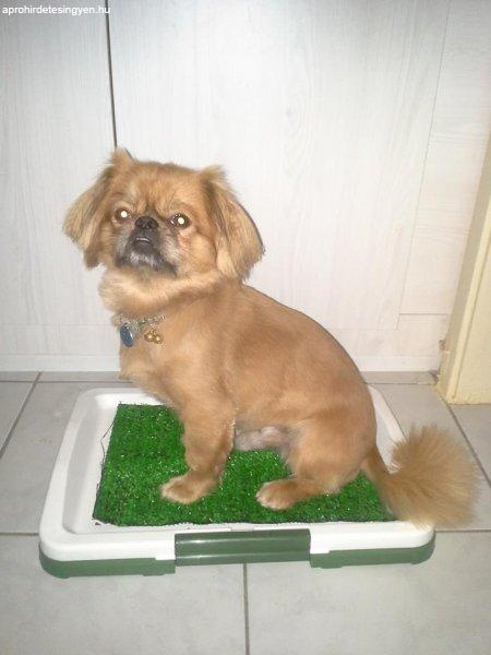 kutya+wc