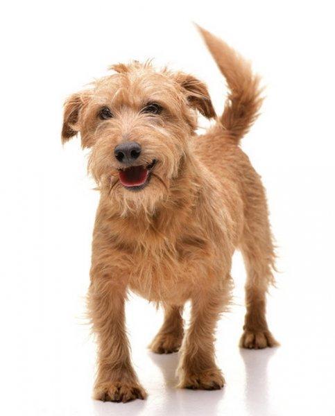 M%F3kuska++%26%238211%3B+vid%E1m%2C+%E9rdekl%F5d%F5%2C+kedves+kutya