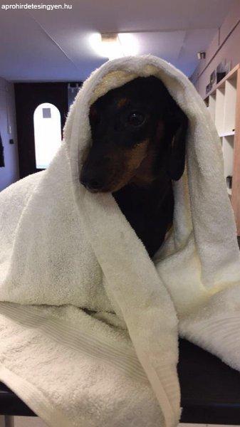 Kutyakozmetika+Dabason+%21