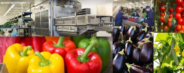 Londoni  zöldségraktári munka lehetőség