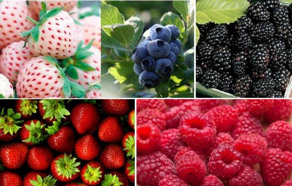 Gyümölcs csomagolás Hollandiában