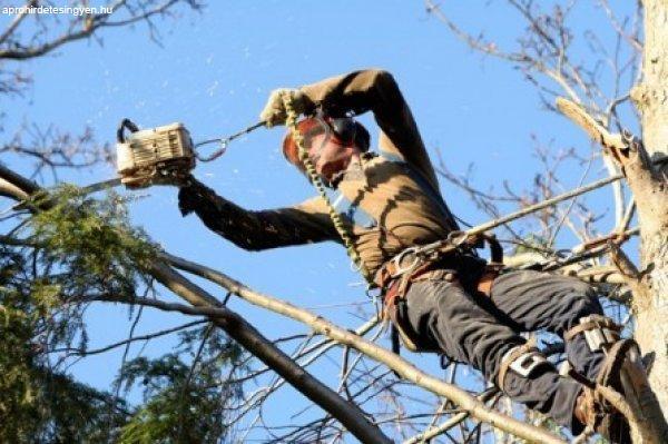 Lakott-területi fakitermelő képzés