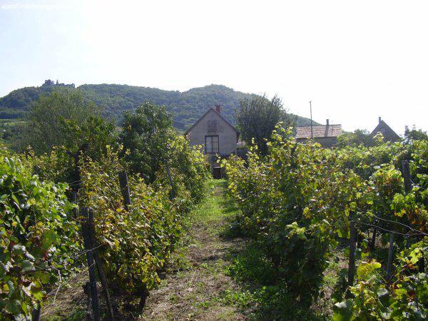 Somlószőlősön telek házzal eladó