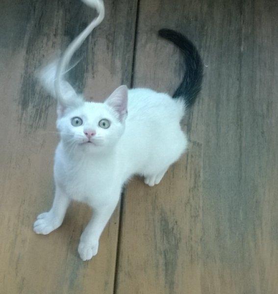 Különleges színű 2-3 hónapos kislány cica - Ajándék Házi - Budapest ... 7cfab0d0f9