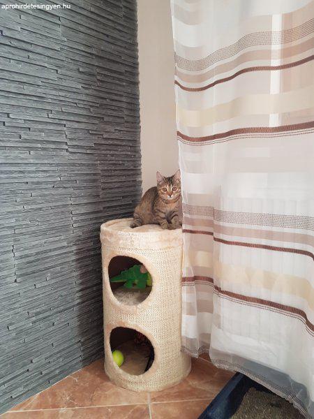 Kislány cica - Ajándék Házi - Budapest XVIII. kerület - Apróhirdetés ... 946e320764