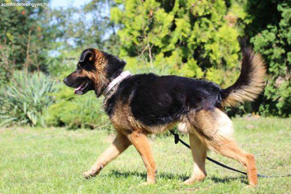 Dexter+-+t%F6k%E9letes+jellem%FB%2C+csal%E1di+kutya
