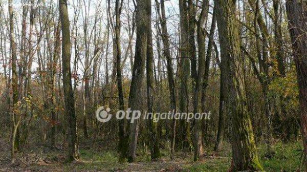 Elad%F3+Sz%E1nt%F3f%F6ld%2C+legel%F5+Budapest+XXIII.+ker%FClet+K%FClter%FClet+