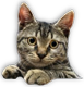 http://aprohirdetesingyen.hu/hirdetesek/cats/47/macska.png